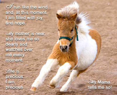 About us... are we all sweet, baby miniature horses?