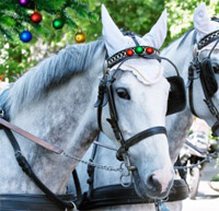 White horses and carriage at our little mall... all that was missing was... snow! : )
