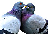 Birds - Love is a Many Splendored Thing